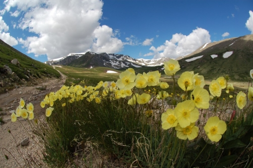 early summer on Altai range