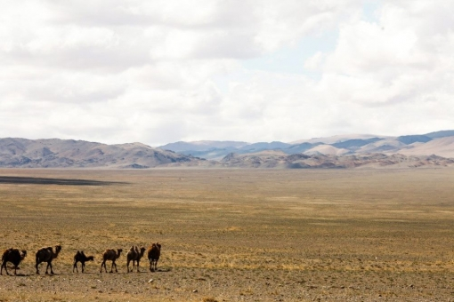 Familiarity with the culture and nature of Western Mongolia